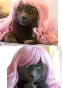 glamourpuss. its a book, how cute kitties in wigs! haha. <3