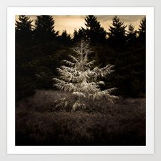 White fir tree set against a contrasting moody sepia backdrop.