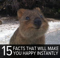 15 facts that are instant mood boosters - this did, I smiled right away - especially at this little critter! Make You Smile, I Smile, Make Me Happy, Your Smile, Are You Happy, Happy Facts, Fun Facts, Number 9, Wombat
