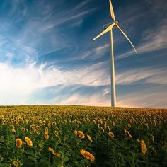 Wind turbines (even expensive commercial ones) are not something you can install and forget about! Keep your wind turbine in tip-top condition with this maintenance schedule. Types Of Renewable Energy, Solar Powered Lamp, Coral Bleaching, Solar Water Heater, Mother Earth News, Best Solar Panels, Solar Panel Installation, Solar Energy System, Diy Solar