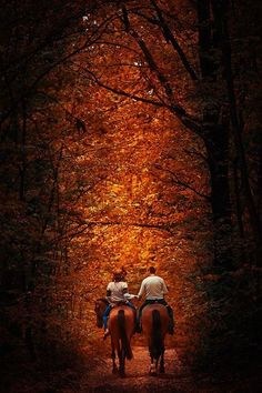 A horseback ride through the beautiful autumn trees......