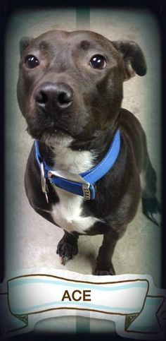 ACE WAS ADOPTED FROM THE SHELTER!!  GREAT DOG!!!!!!