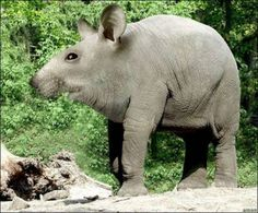 25 Weird Animals Pictures | Wildlife Pictures, Tourist Attractions  it doesn't exist; it is a photoshopped animal.