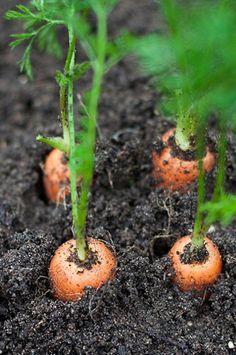 In the garden Herb Garden, Vegetable Garden, Country Life, Country Living, Rabbit Garden, Farms Living, Down On The Farm, Grow Your Own Food, Farm Gardens