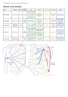 an-easy-way-to-learn-shoulder-muscles by Christiane Riedinger via Slideshare