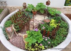 Miniature garden. I love this!