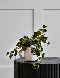 Faux Fittonia Trailing Plant Real Plants, Faux Plants, Home Accessories Stores, Chalet Style, Elements Of Nature, Succulent Care, Bunch Of Flowers, Botanical Prints, Contemporary Furniture