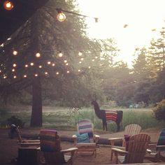 Dusky campfire llama.