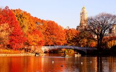 Central Park, New York, NY  -  18 Beautiful Photos of Fall From Around The World           | Travel + Leisure