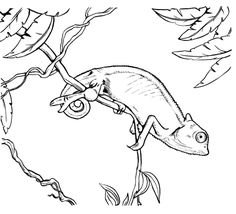 chameleon iguana coloring page | VBS decorations | Pinterest ...
