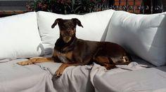 Dein Hundeshop für Hundesnacks, Hundespielzeug und Hundezubehör