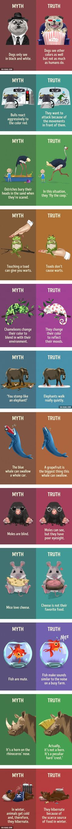 12 myths about animals that we still believe - 9GAG