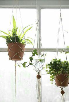 Grün Pflanzen