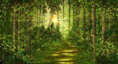Forest Trails - Tapetit / tapetti - Photowall
