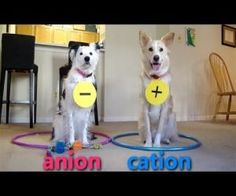 """Dogs Teaching Chemistry. Never did """"get"""" chemistry but this helps."""