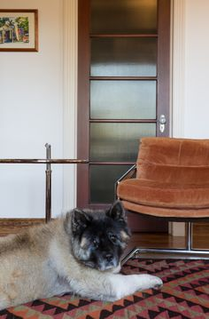 An Akita named Lola at an oceanfront property in Southern California. #dogsofwsj