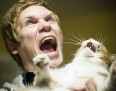 ネコの面白画像がヤバすぎるwww - NAVER まとめ