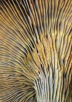 Fungi pattern