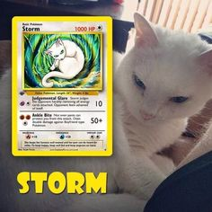 Let's take a look at some pets majestically represented as Pokemon. Speaking for myself - I'm not going to mess with Storm. That cat Pokemon doesn't look to be in the mood for half measures! Pokemon Trading Card, Pokemon Cards, Pokemon Weaknesses, Type Pokemon, Pokemon Fusion, Catch Em All, Card Games, Game Cards, Your Pet