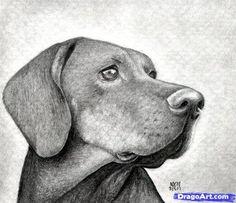 como dibujar algunos animales (realistas) (parte1) - Taringa!