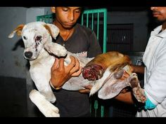 Critically injured street dog gets a new life! - YouTube this story is beautiful this dog is amazing