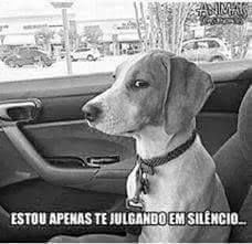 Nss me definiu😂 Dankest Memes, Funny Memes, Jokes, My Animal, Funny Posts, Laugh Out Loud, Funny Quotes, Lol, Relax