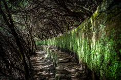 hier: Rabacal Madeira