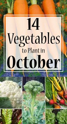 ctober is probably the best time to grow vegetables. If you are wondering what vegetables might grow well in India, then here we have some easy ones for you. Vegetable Garden For Beginners, Home Vegetable Garden, Gardening For Beginners, Gardening Tips, Planting Vegetables, Organic Vegetables, Growing Vegetables, Garden Plants, Are You The One
