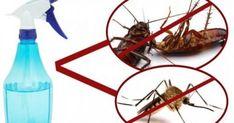 Φτιάχνουμε το σπρέι που εξαφανίζει κουνούπια-κατσαρίδες-μύγες σε μόλις 2 ώρες