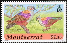 Crested Quail-Dove stamps - mainly images - gallery format