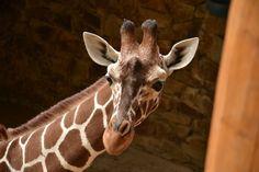 Sacramento Zoo Coupons & Discounts The Know and Go Blog: USA Vacation Travel Coupons & Discounts http://www.theknowandgo.com/blog/ #sacramentozoo #coupons #discounts #california #vacation #travel #theknowandgo