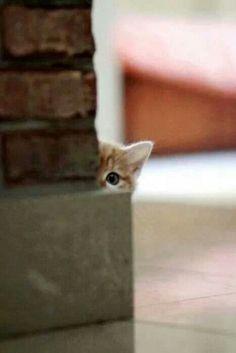 Peek a boo!!!!