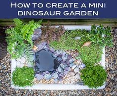 Here's an easy way to create a miniature dinosaur garden,ideal for little explorers!What you need:An old Belfast sink'Leca' lightweight drainage aggregat