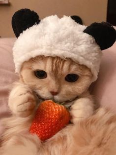 Baby Animals Super Cute, Cute Baby Cats, Cute Little Animals, Cute Cats And Kittens, Cute Funny Animals, Kittens Cutest, Cute Dogs, Funny Cats, Baby Animals Pictures