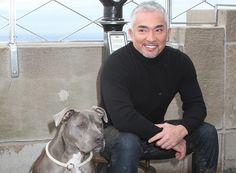 Die Verhaltensforscherin Dr. Dorit Feddersen-Petersen gilt als Koryphäe unter den Hundewissenschaftlern. Über das Spielen unterhielt sie sich mit DOGS-Autorin Andrea Mertes