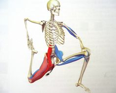 You can see here how the muscles from your legs attach to your lower spine. If they are tight and short they pull on your spine and cause low back pain. (That's what muscles do!) There are different muscular causes for back pain but this psoas muscle str Lower Back Pain Relief, Neck And Back Pain, Hip Pain, Low Back Pain, Muscle Stretches, Low Back Stretches, Psoas Muscle, Muscle Pain, Psoas Stretch