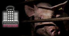 Kampagne geht weiter: Strafanzeige gegen das Schweinehochhaus erstattet