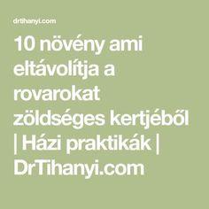10 növény ami eltávolítja a rovarokat zöldséges kertjéből   Házi praktikák   DrTihanyi.com