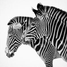 duality ++ photographer: geoff yale