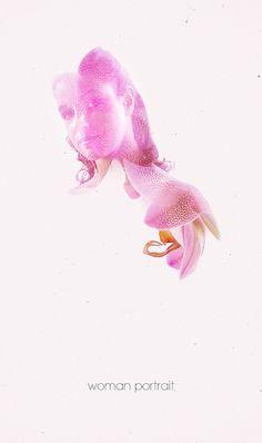 Sere_orchidea