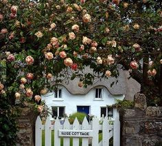 rosy cottages...