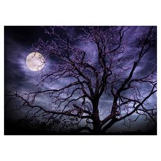 Moon and Tree Photography Art Print ($30) ❤ liked on Polyvore featuring photographic wall art, moon wall art, moon home decor, tree wall art and tree home decor