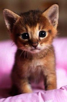.altından farklı olduğunu düşünmüyorum :p ( değerlisin anlamında da söyledim ) kitty