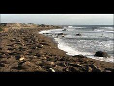 Populations Distribution   Biology   Ecology - YouTube