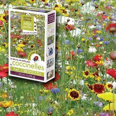 Prairie Fleurie - Fleurs amies des coccinelles - 7m2 - Graines de Fleurs Utiles