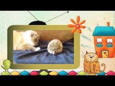 Видео клип Коты и другие... животные. Серия 2. #Коты и - YouTube