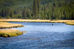 Fly fishing in the Yellowstone River | Flickr - Photo Sharing!