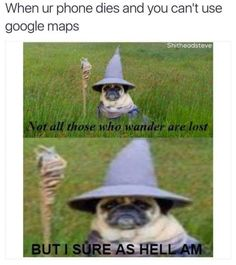 Post with 7622 votes and 282611 views. Tagged with memes, lordoftherings; Two of my Favorite Things: LOTR and memes Funny Animal Memes, Cute Funny Animals, Funny Cute, Haha Funny, Really Funny, Funny Stuff, 9gag Funny, Funny Happy, Animal Quotes
