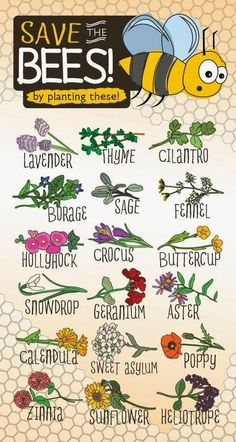 Wow. These plants in your garden will help save bees. #eco #garden