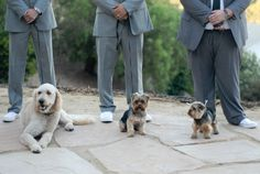 dogs in the wedding